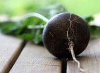 Редька при беременности: советы по употреблению корнеплода