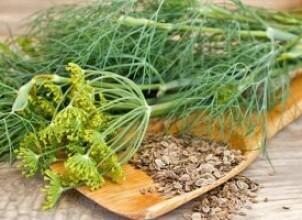 Семена и зелень укропа в меню беременной: полезно или опасно?