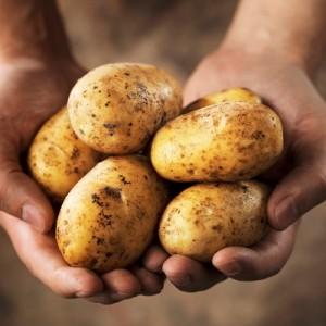 Аллергия на картошку у грудничка