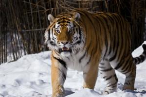 В Московском зоопарке можно отметить день рождения