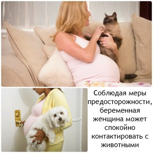 Осторожно обращайтесь с домашними животными