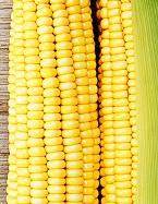 кукурузу беременным