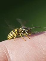 первая помощь ребенку при укусе осы