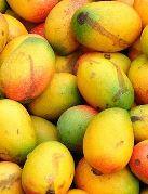 для беременных манго